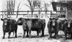 Wildwood Farm was famous for the prize Black Angus beef cattle and Shropshire Rams
